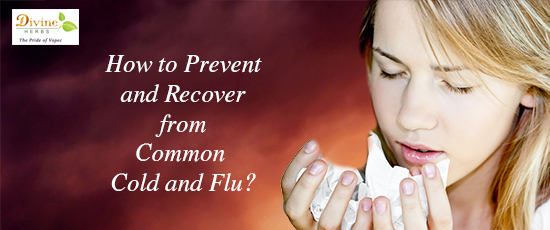 How to Prevent and Recover from Common Cold and Flu