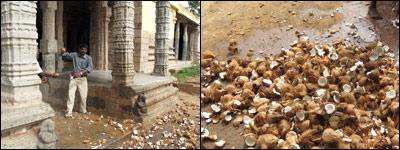 Coconut Smashing